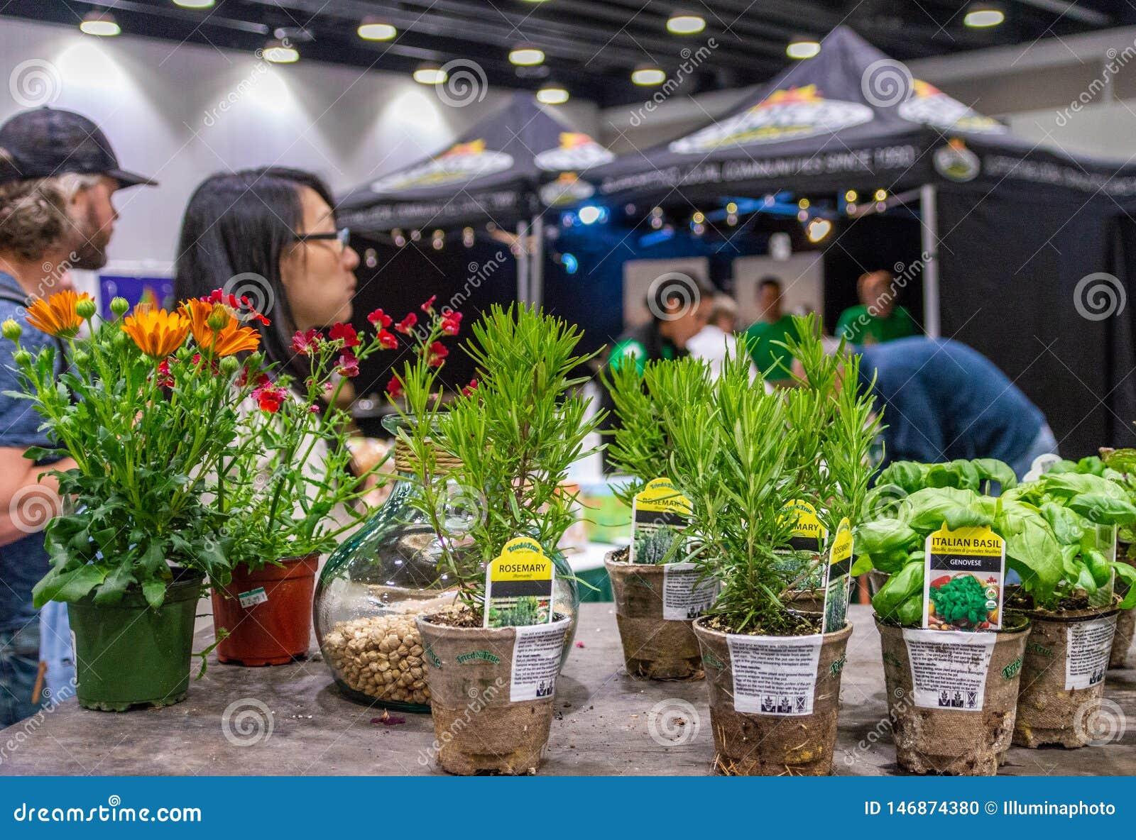 Vancouver, Columbia Británica, - 5 de mayo de 2019: Hierbas en potes abonablees en VegExpo, centro de conferencia de Vancouver