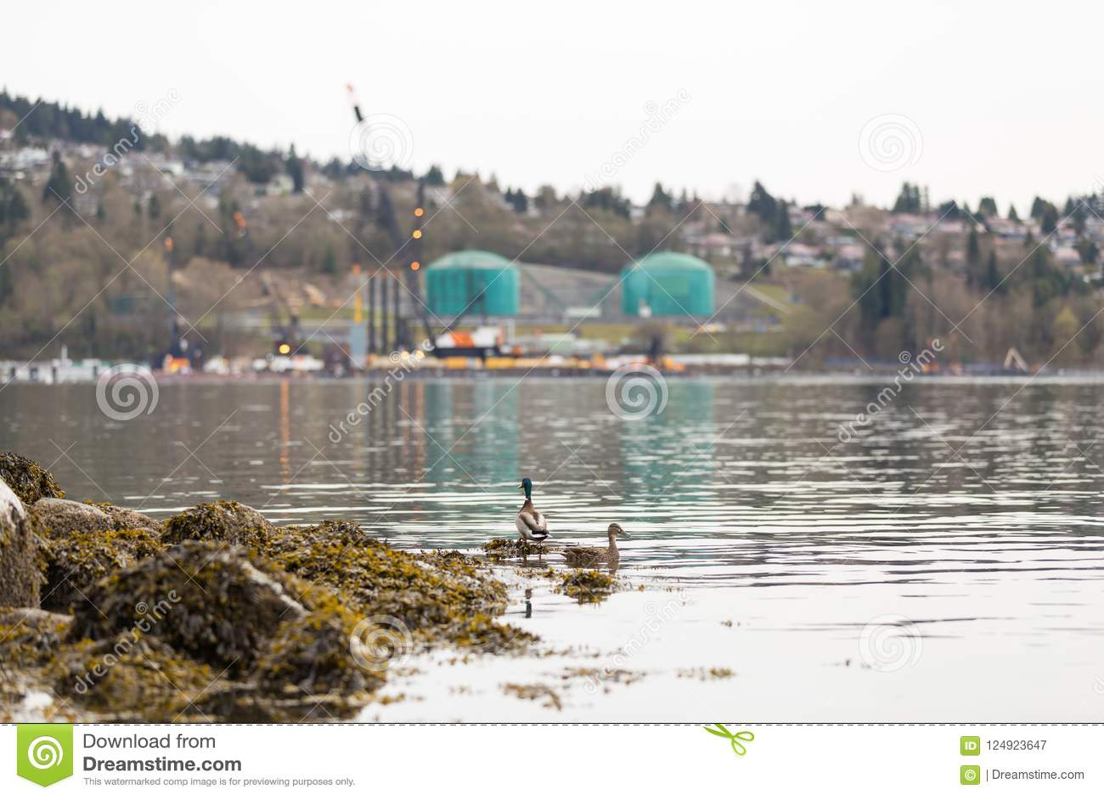 VANCOUVER DEL NORTE, A.C., CANADÁ - ABRIL, 09, 2018: El buque de petróleo cerca del Parkland aprovisiona de combustible la refine