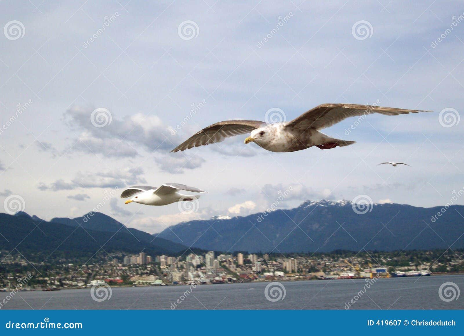 Vancouver ptaki