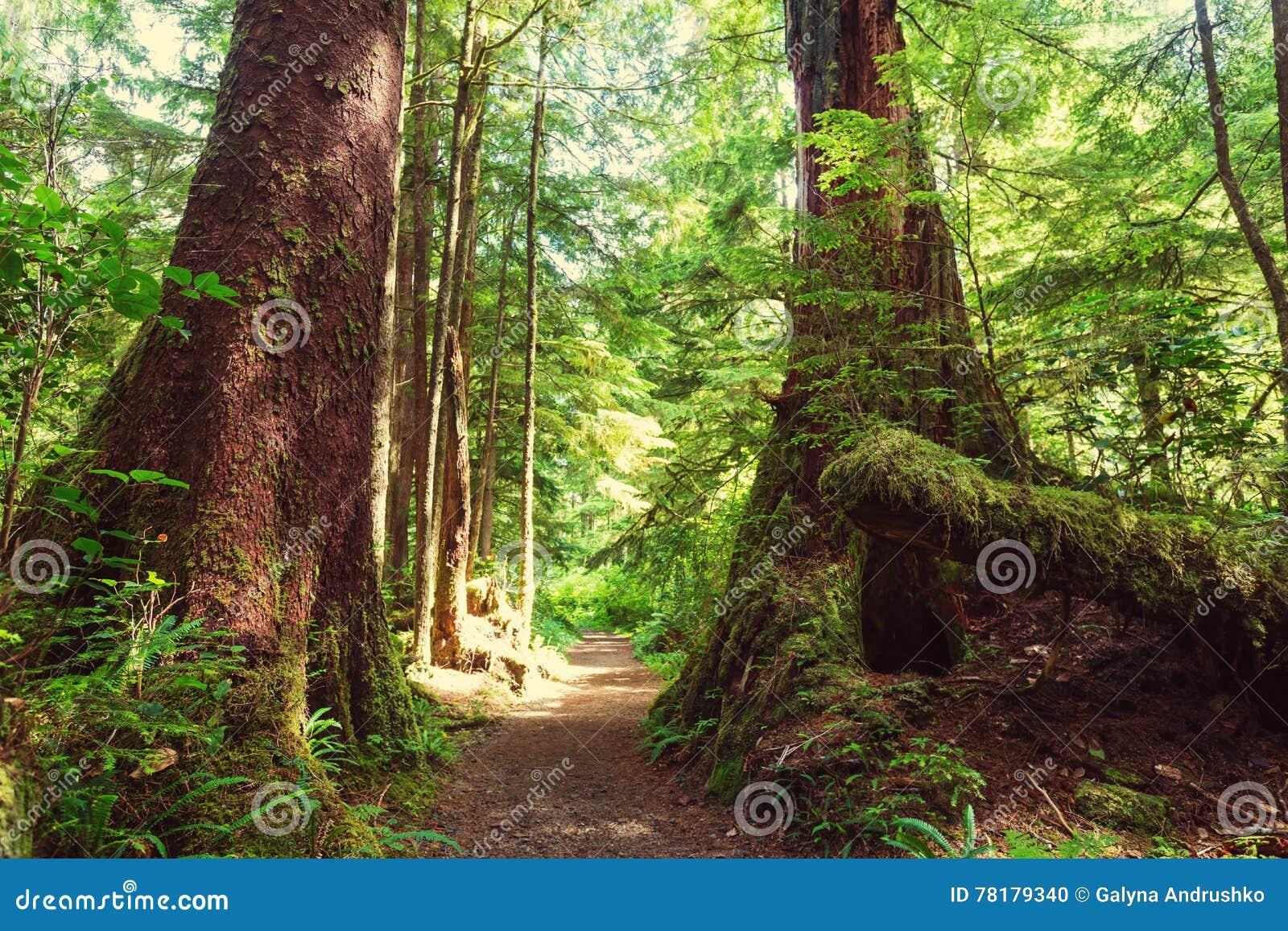 Vancouver skog