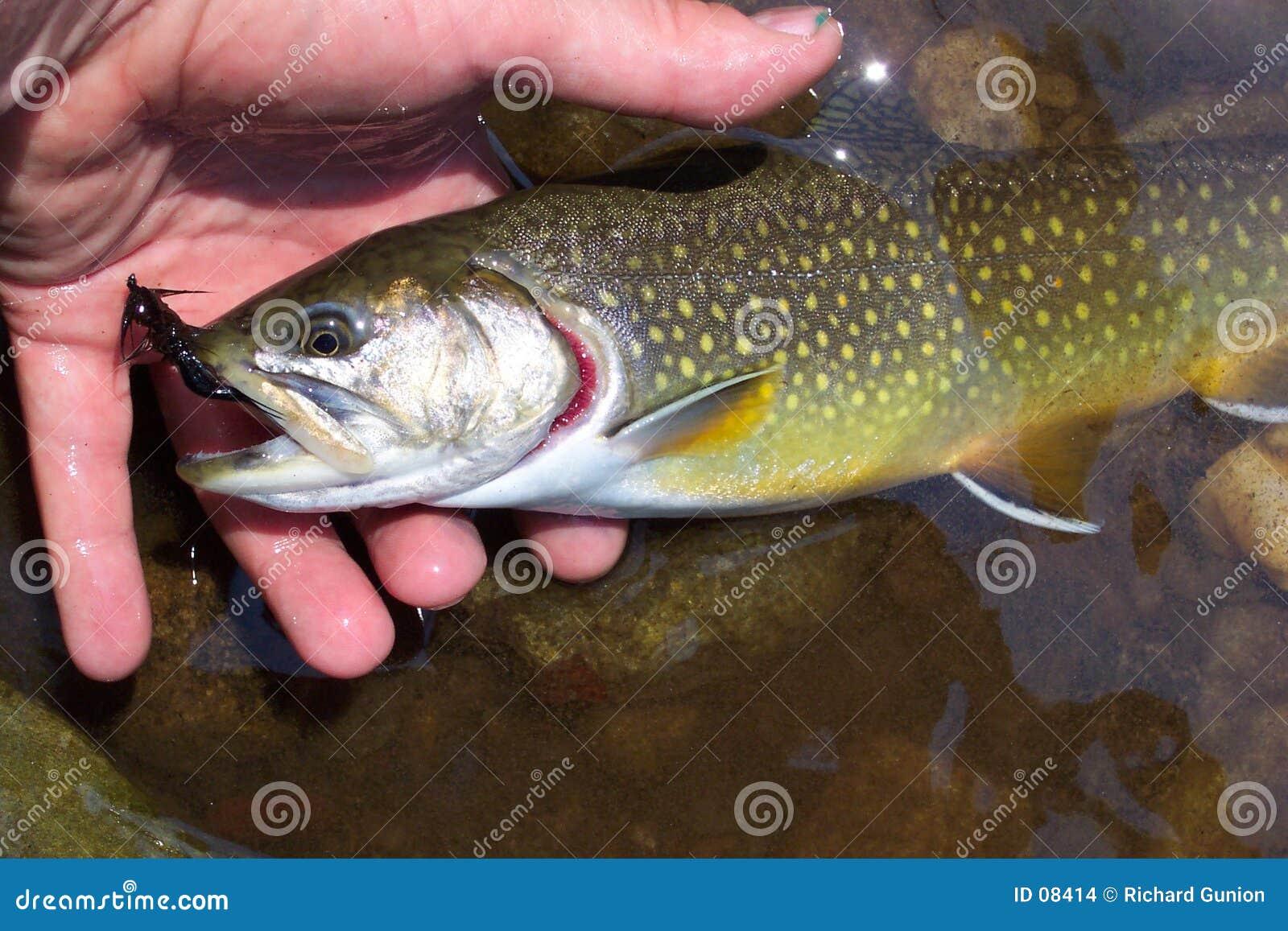 Vangst en Versie