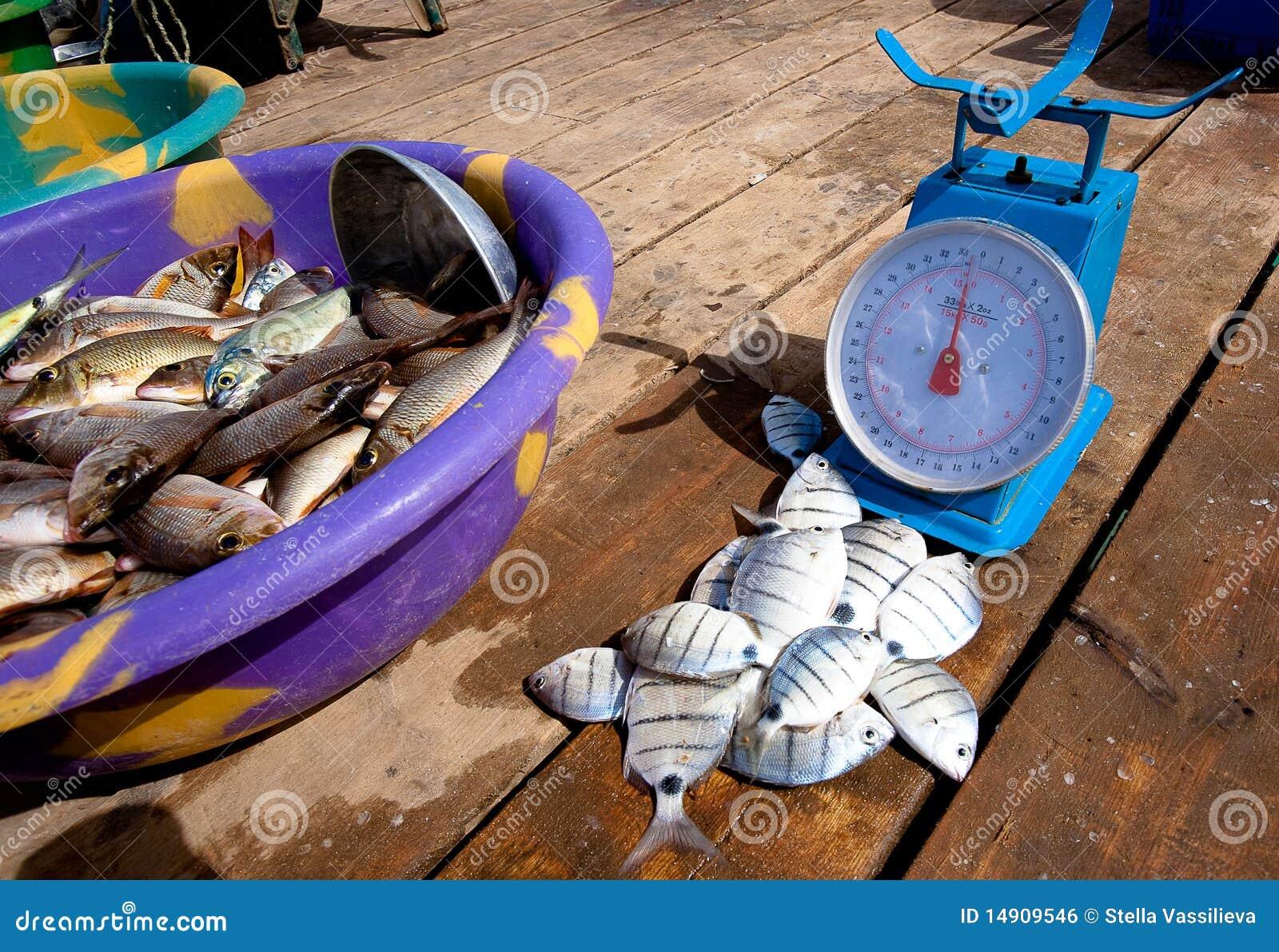 Vangst van de dag