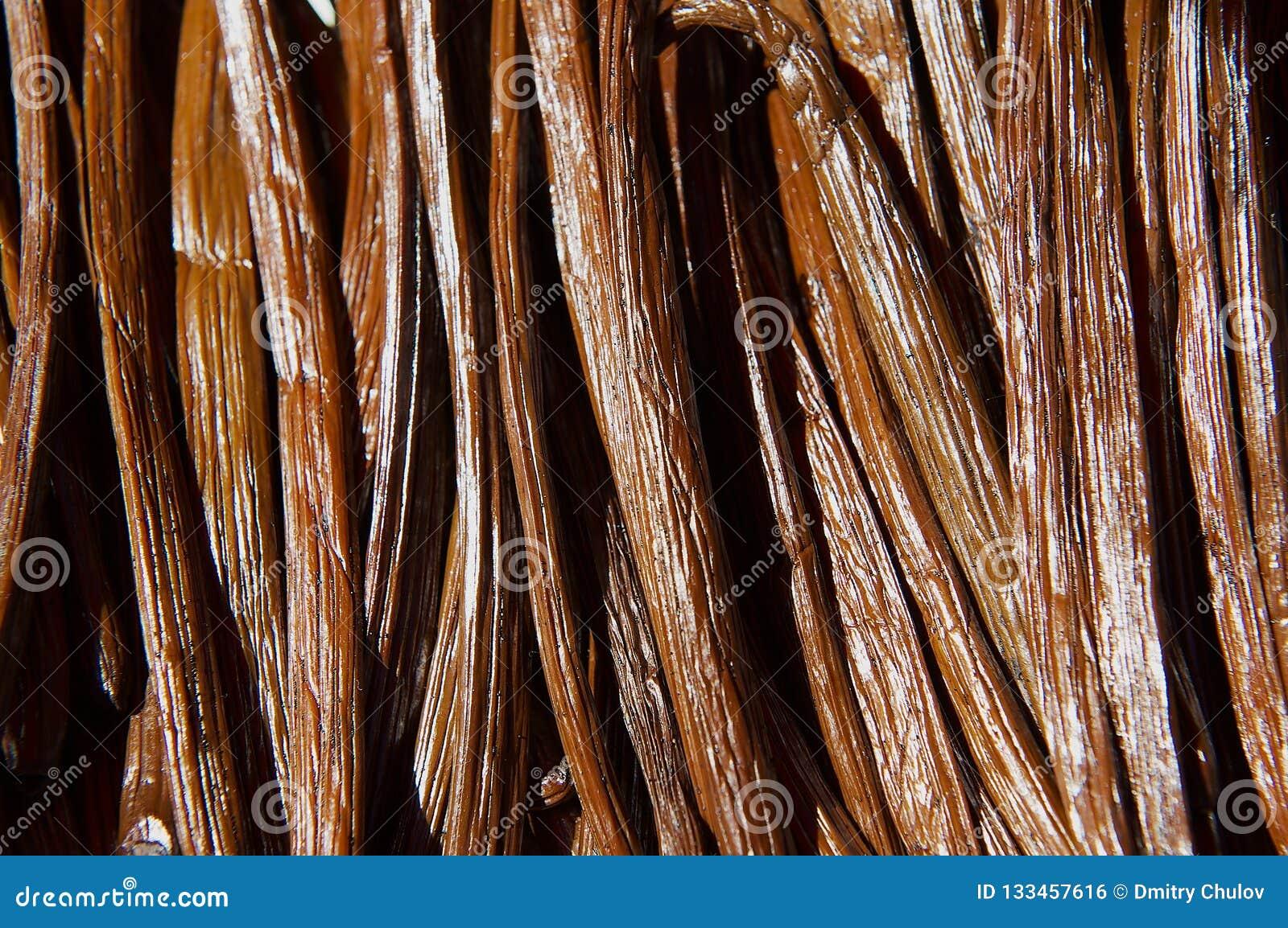 Vanilla dry fruit in the fermentation process for grading vanilla flavor at La Reunion island.