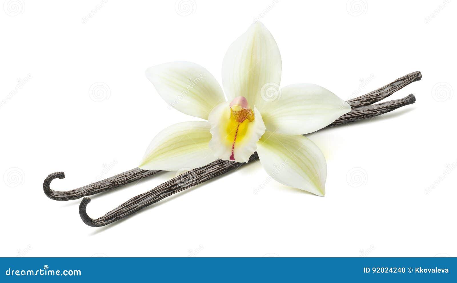 Vanilla flower pod diagonal 2 isolated