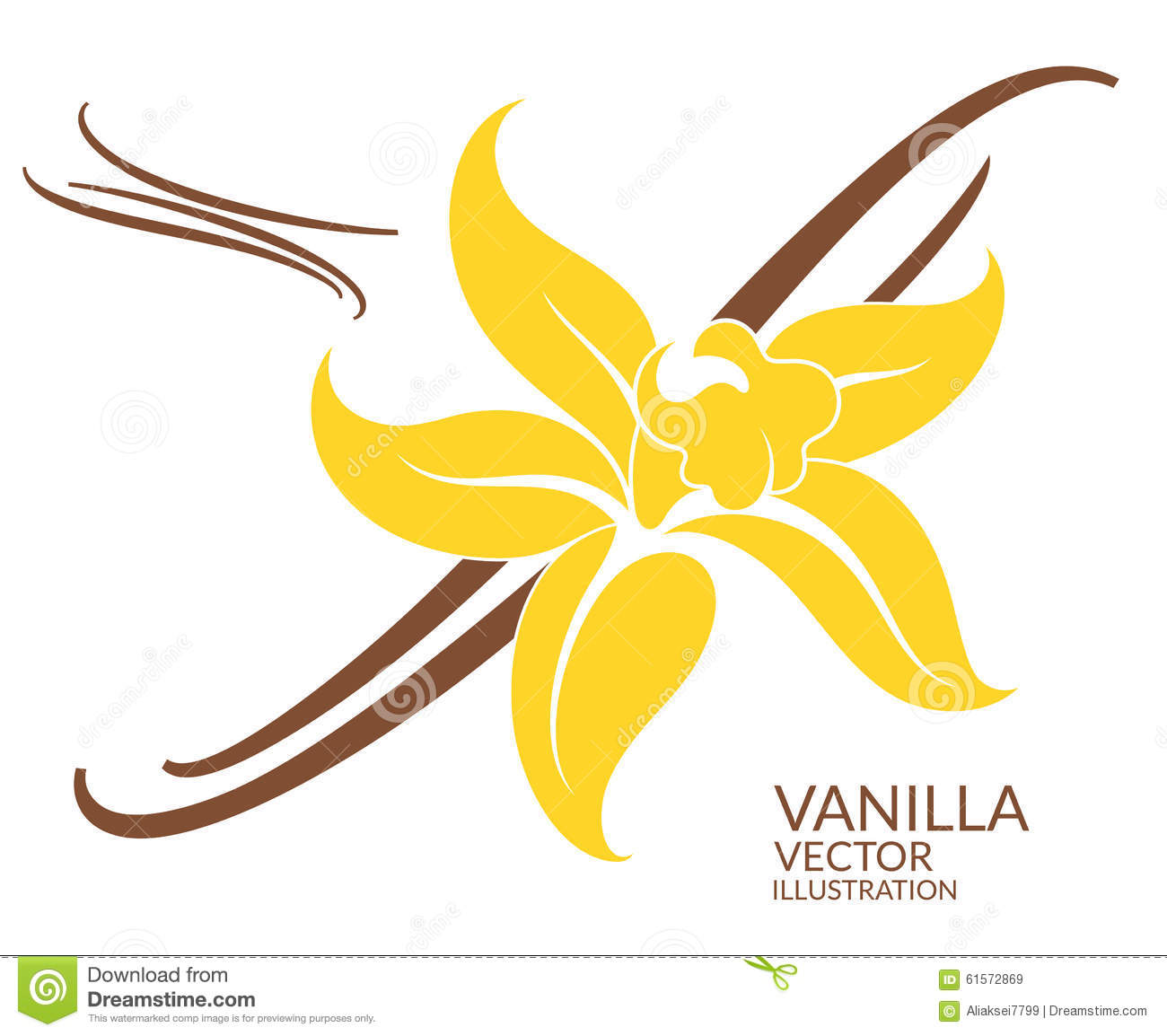 vanilla flower stock vector illustration of stick