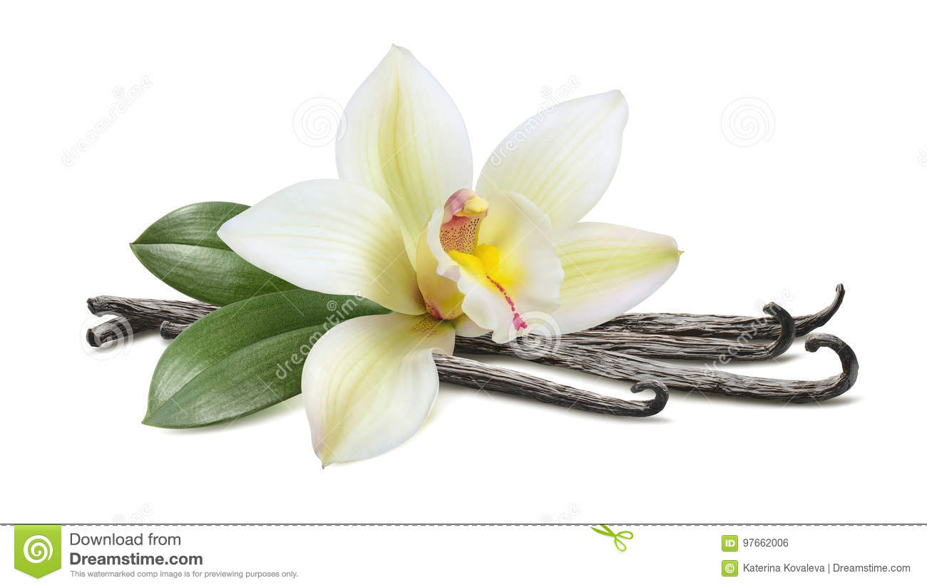 Vanilla with leaves horizontal pod isolated on white