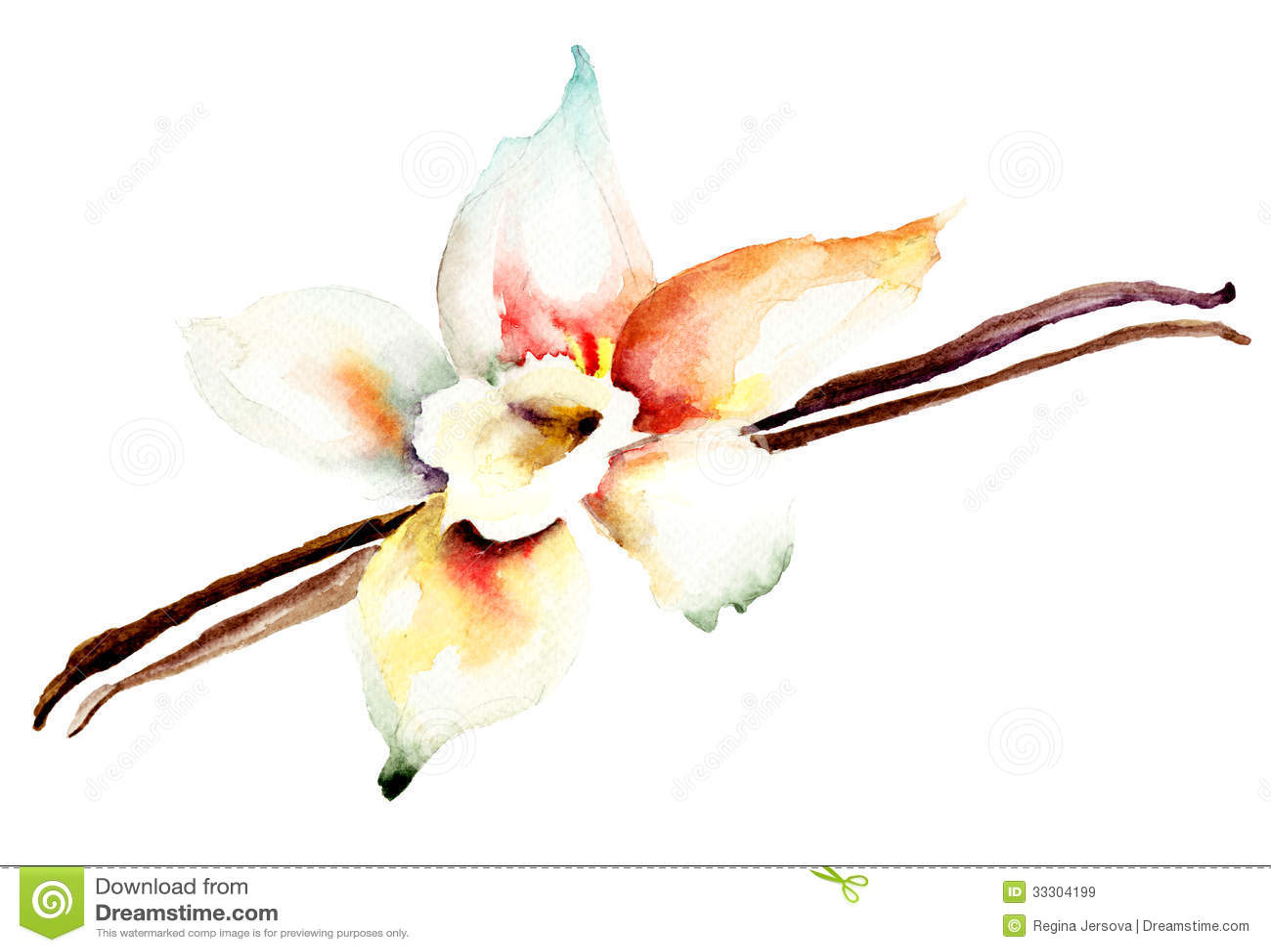 Vanilla Pods And Flower Stock Illustration. Image Of Stick