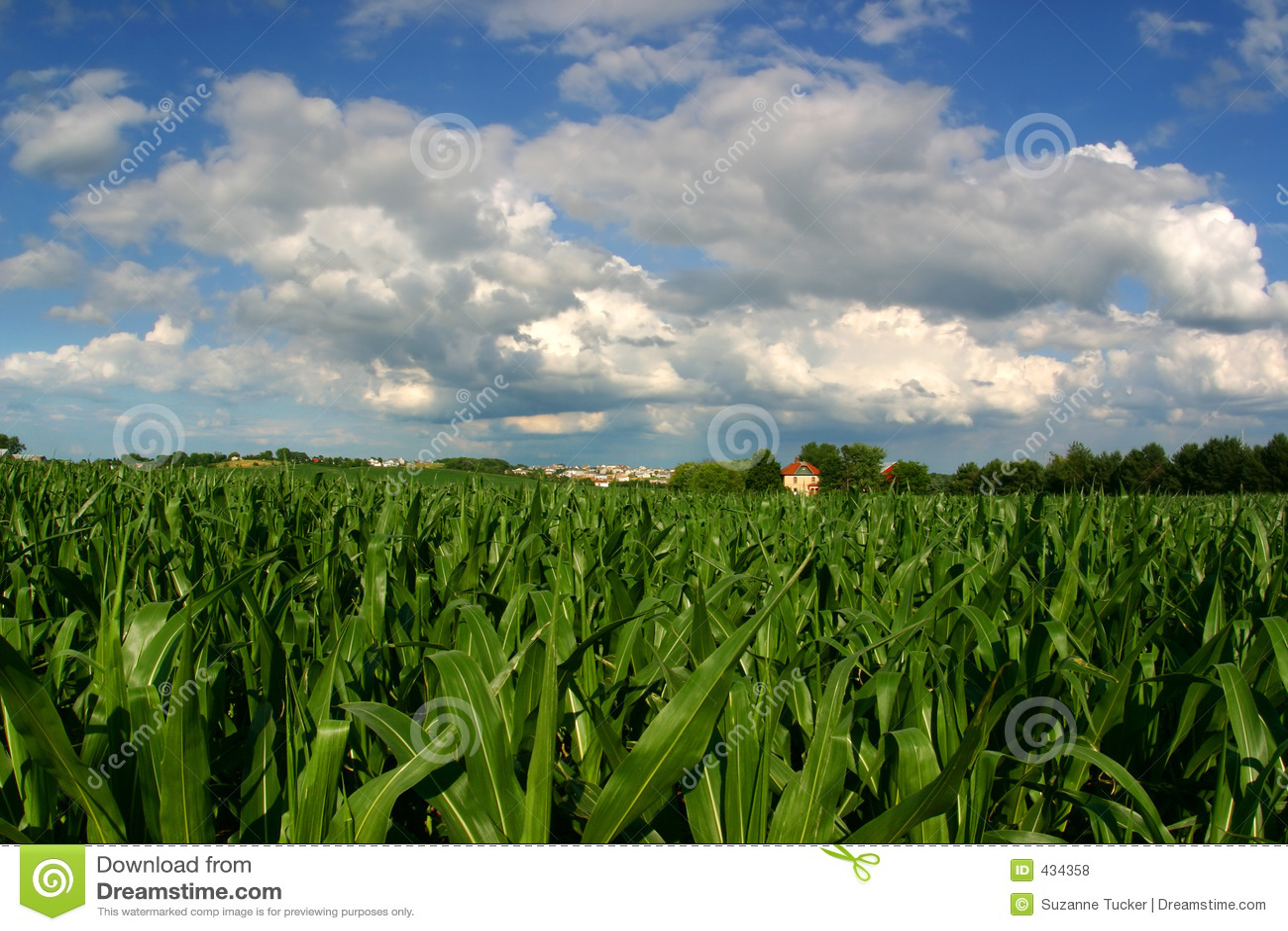 Vanishing Farmland (cornfield and house with housing development