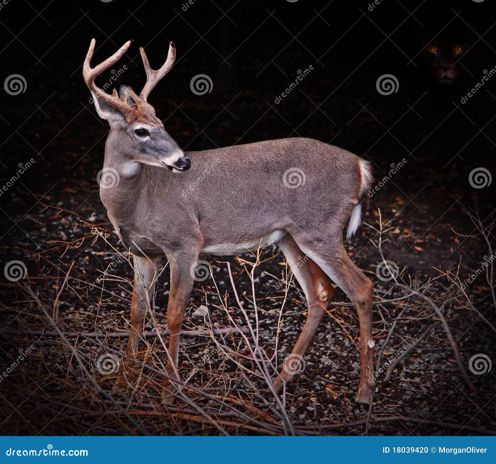 Vara hjortar jagade nervösa skuggor