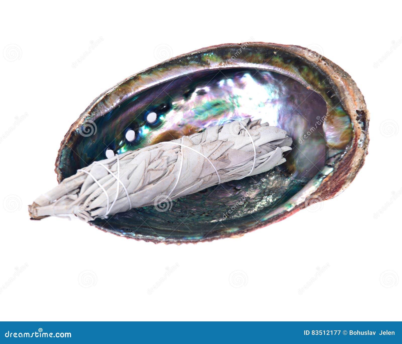 Vara prudente do borrão no shell lustrado brilhante do olmo do arco-íris