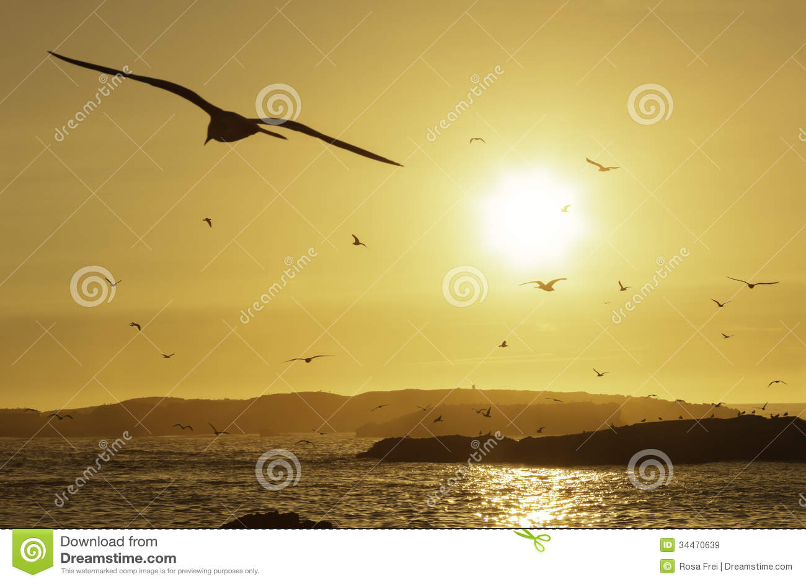 Vare con las gaviotas que vuelan en el cielo en la puesta del sol.