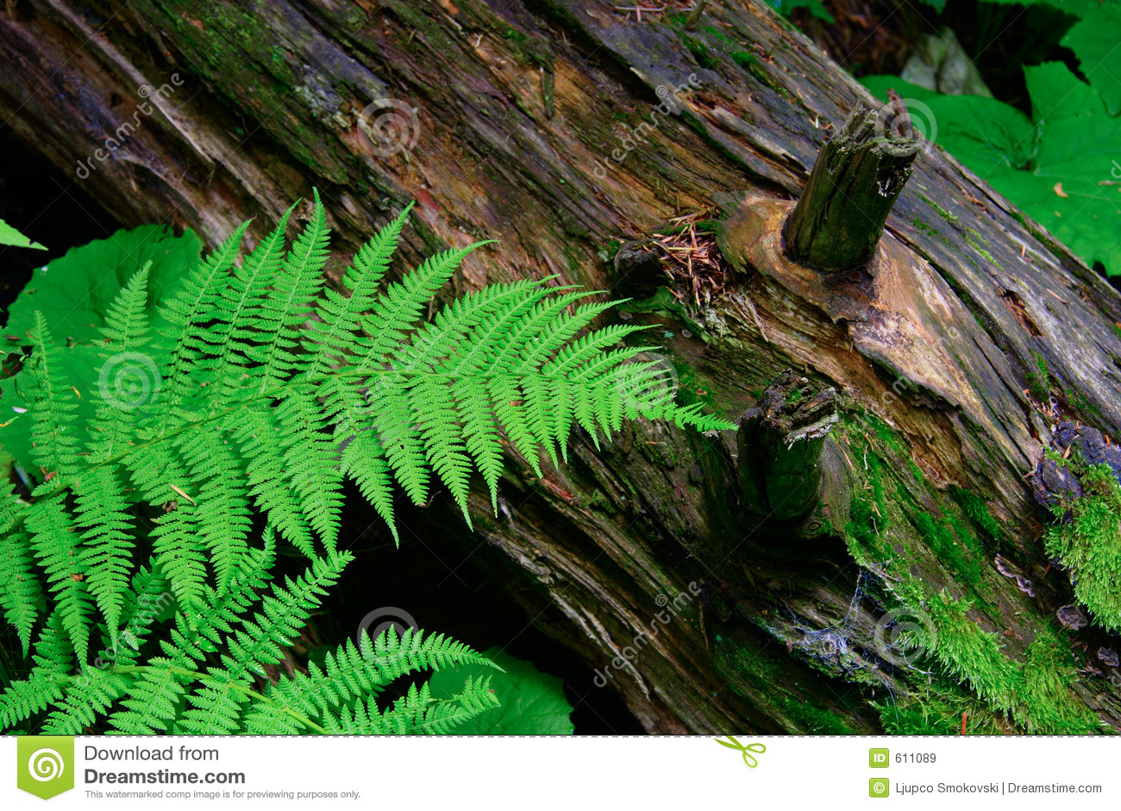 Varen en een opening van een sessie het bos