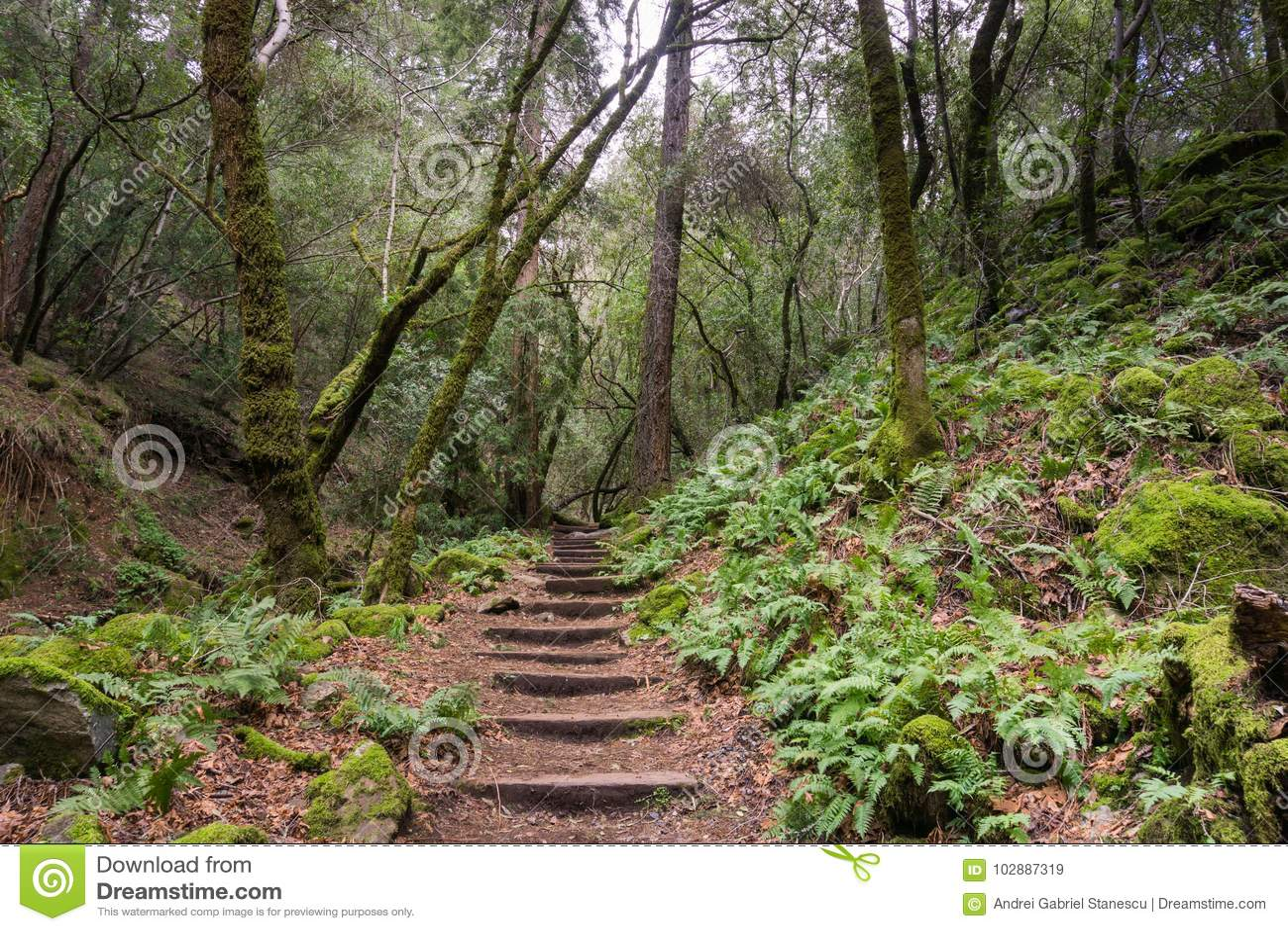 Varen gevoerde wandelingssleep, Sugarloaf Ridge State Park, Sonoma-Provincie, Californië