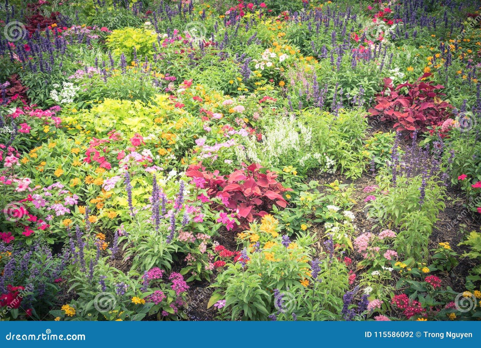 Aménagement D Un Parterre De Fleurs variété colorée de parterre d'impatiens/balsaminaceae f