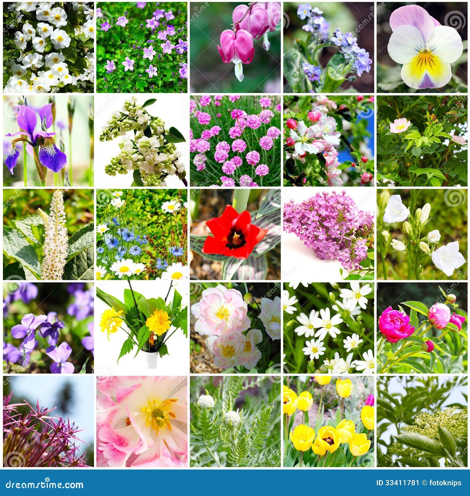 vari t de fleur mosa que de fleurs image stock image 33411781. Black Bedroom Furniture Sets. Home Design Ideas