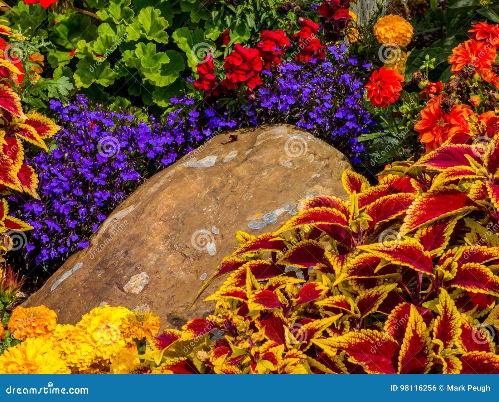 Variété De Fleurs Dans Un Jardin Photo stock - Image du couleurs ...