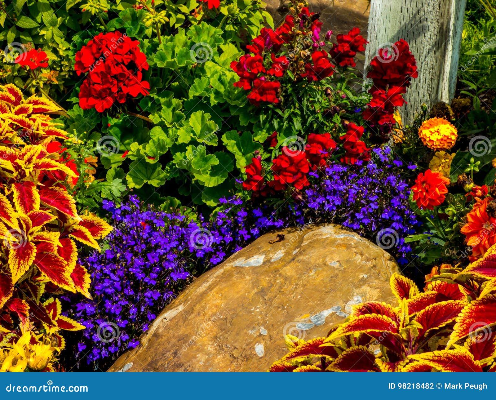 Variété De Fleurs Dans Un Jardin Photo stock - Image du floral ...