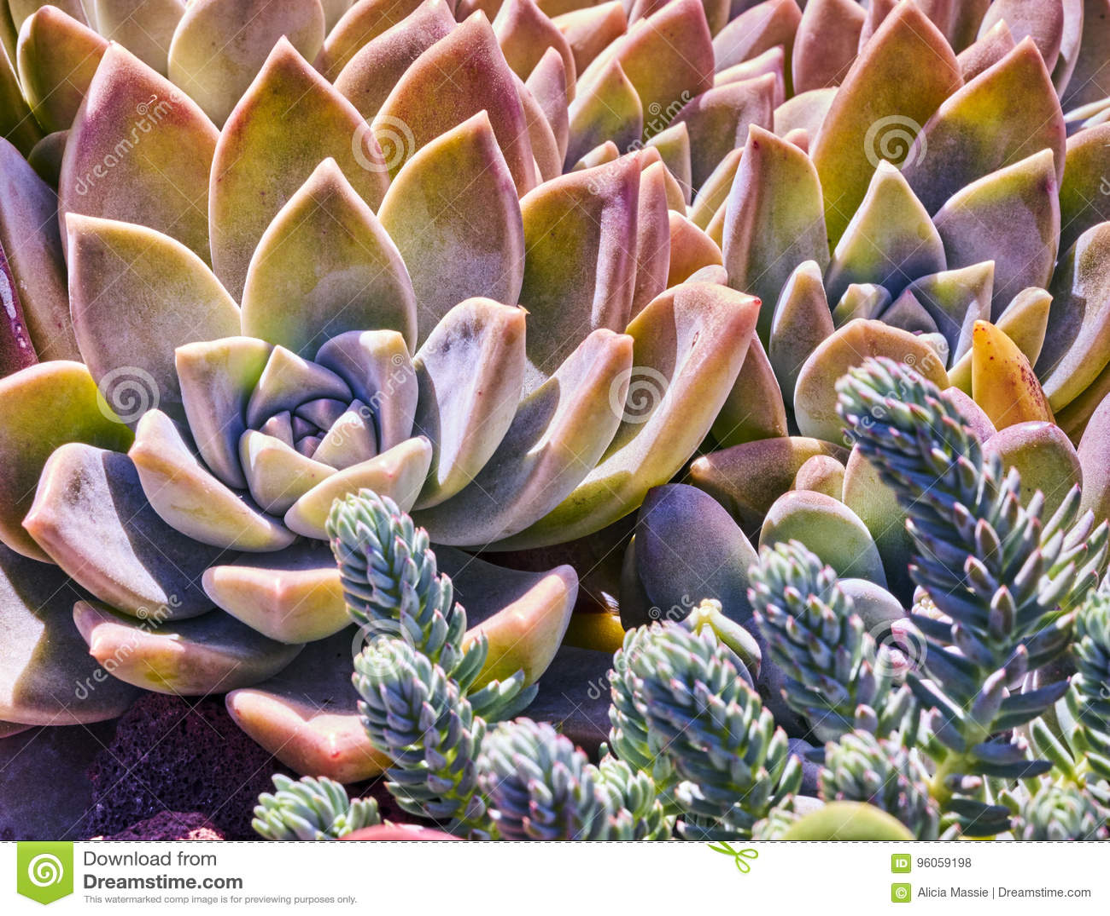 Variété de succulents dans un environnement sécheresse-tolérant