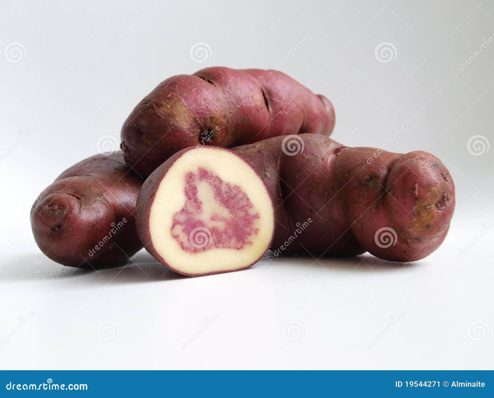 Vari t indig ne de tubercules de pomme de terre image stock image 19544271 - Tableau pomme de terre varietes ...