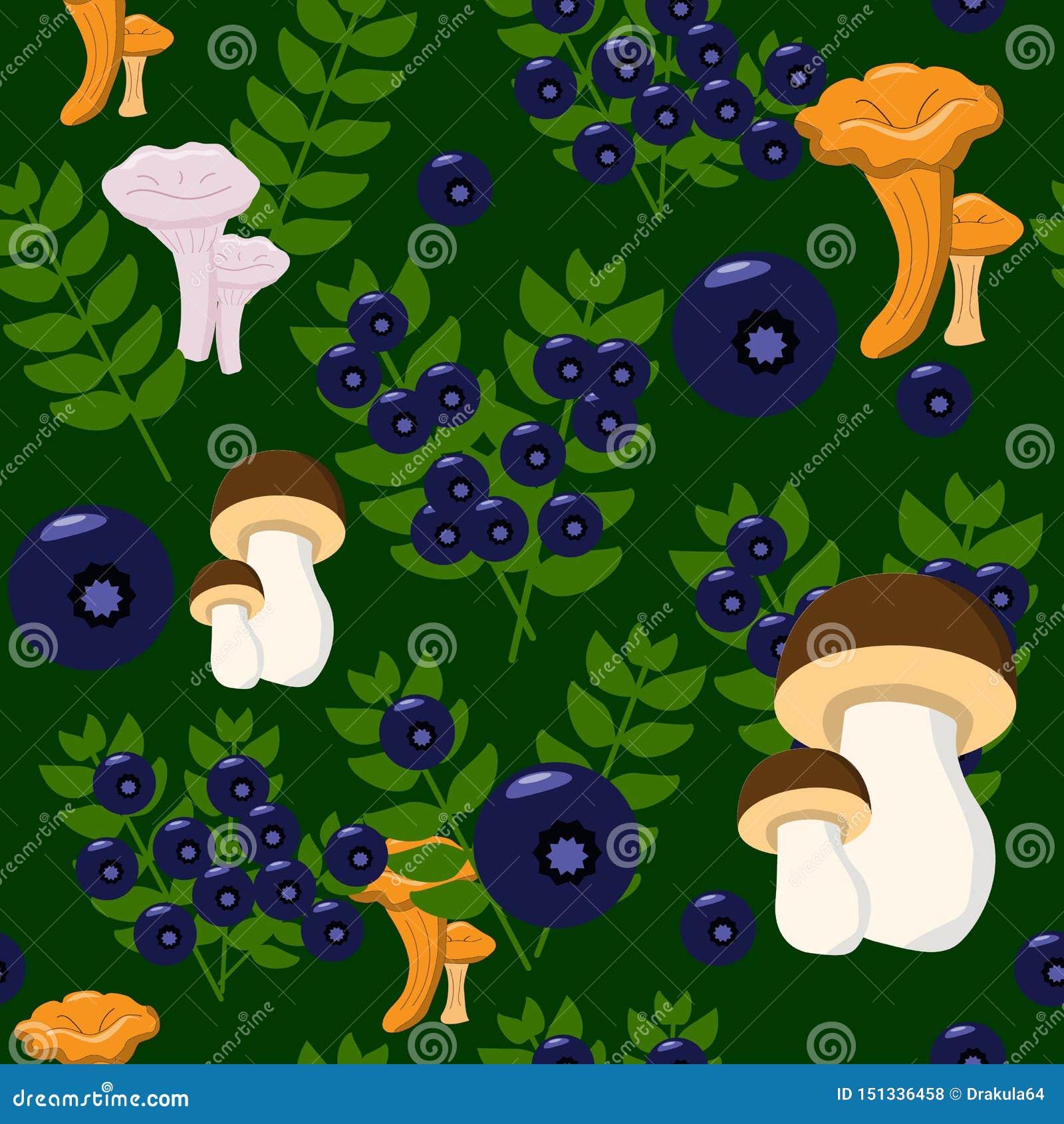 Vari funghi e mirtilli nel modello senza fine della foresta