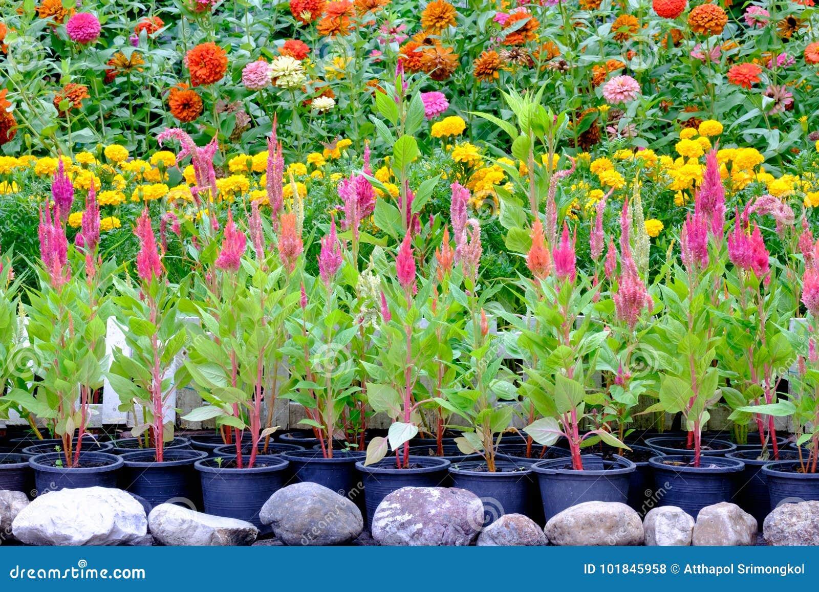 Vari Tipi Di Fiori.Vari Tipi Di Fiori In Vasi Che Sono Disposti Nel Giardino