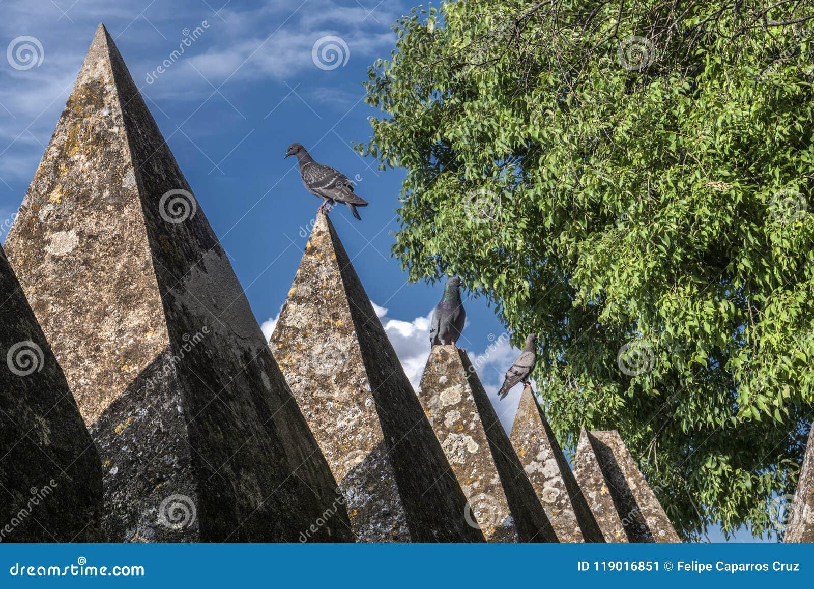 varias palomas encima de las cornisas del castillo es una fortaleza