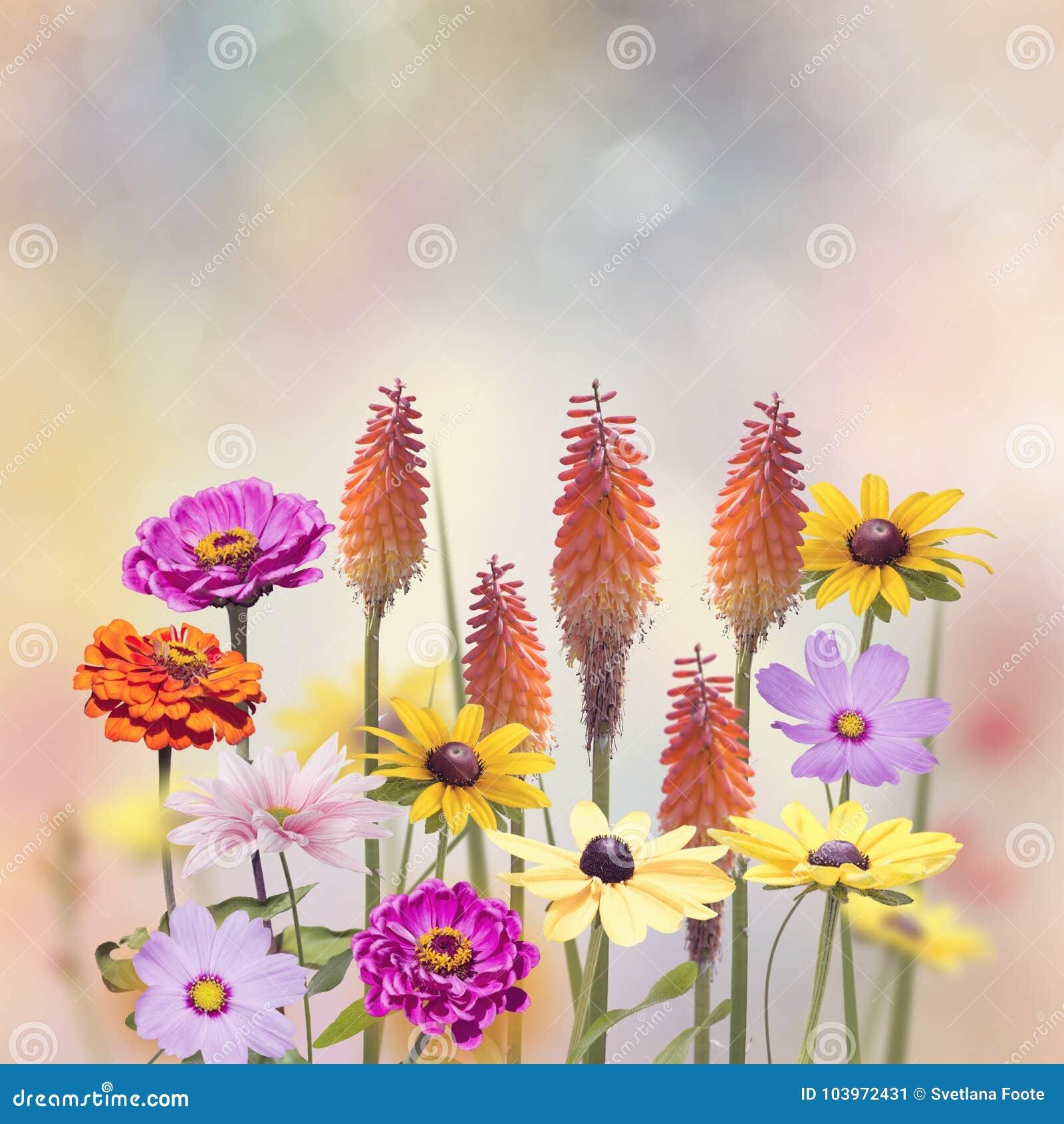 Variation av färgrika blommor