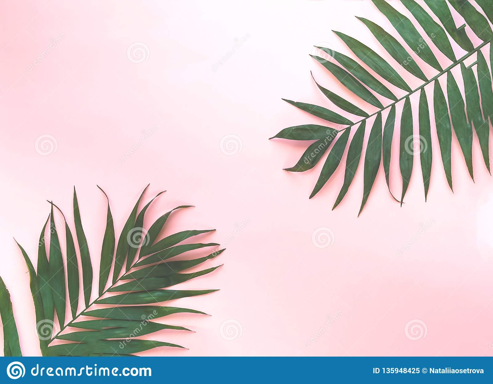 Variations Of Tropical Palm Leaves On Light Texture Creative Tropical Leaves On Pink Background Stock Image Image Of Detail Foliage 135948425 Find over 100+ of the best free tropical leaves images. https www dreamstime com variations tropical palm leaves light texture creative tropical leaves pink background variations tropical palm leaves image135948425