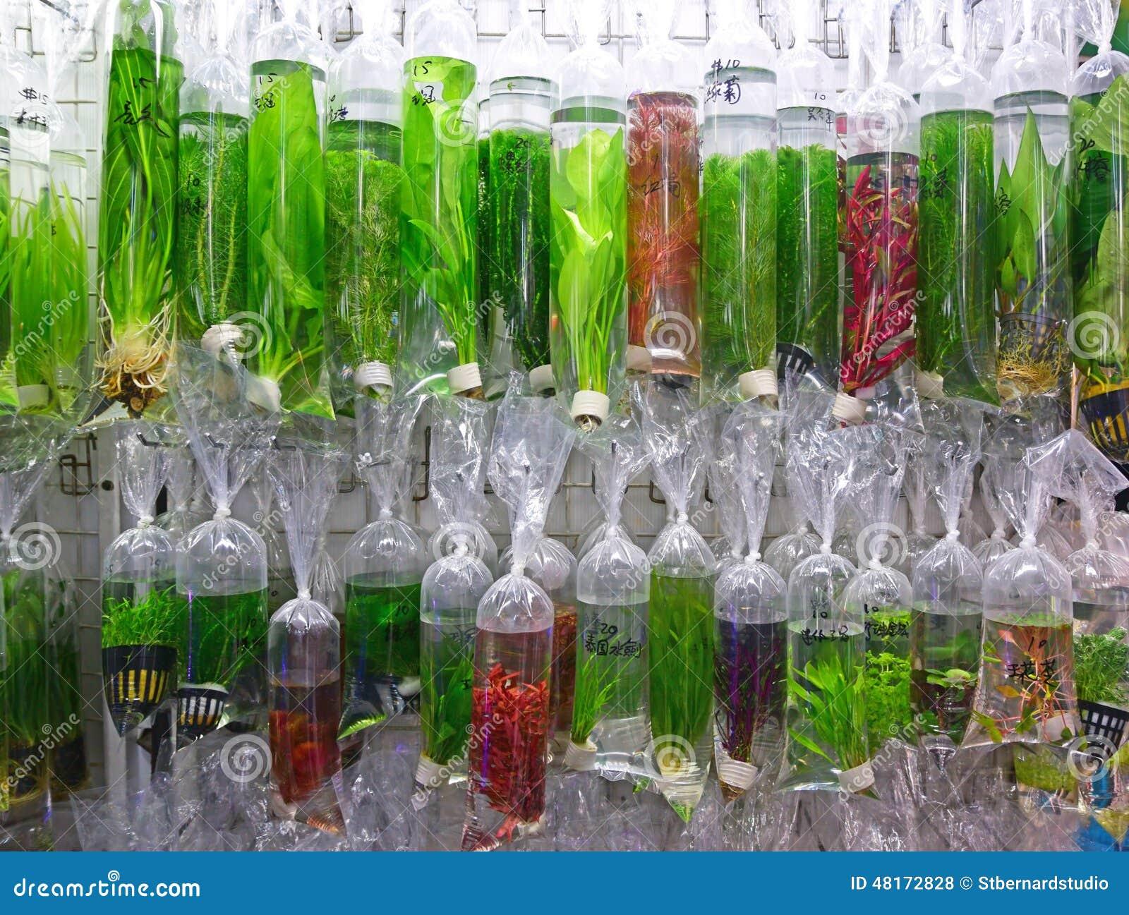 Varie piante acquatiche ornamentali commerciali fotografia for Piante secche ornamentali