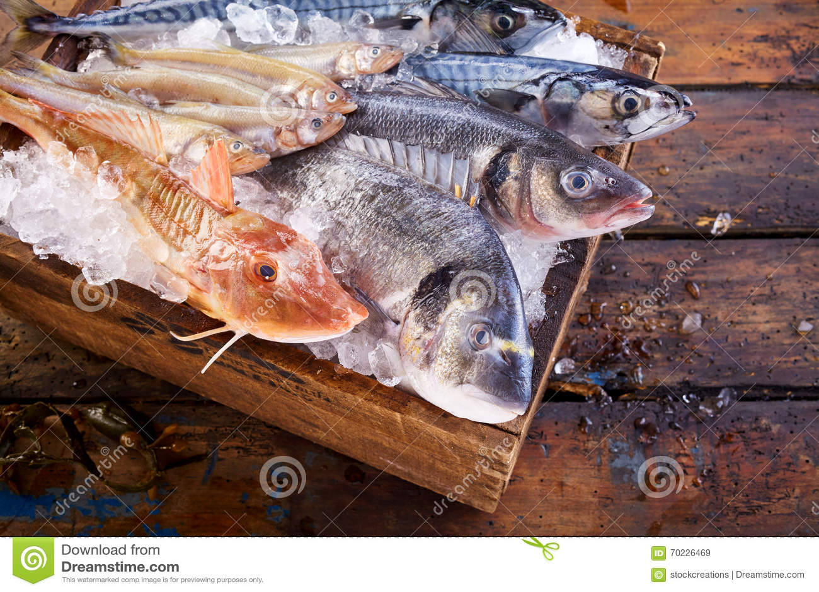 Variedad de peces marinos frescos comestibles en el hielo for Variedad de peces