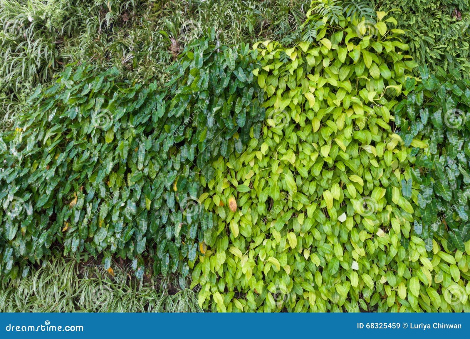 Variedad de plantas en pared vertical de la textura del for Plantas en la pared