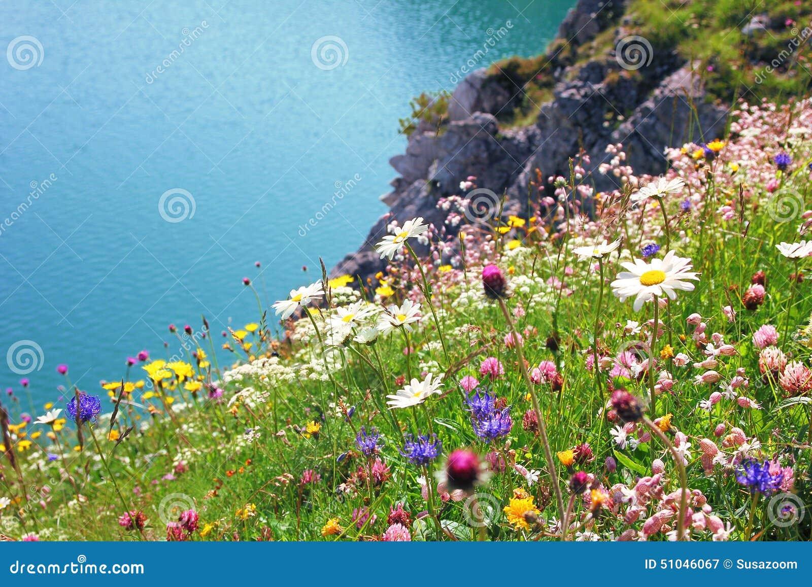 Varietà di wildflowers, paesaggio costiero