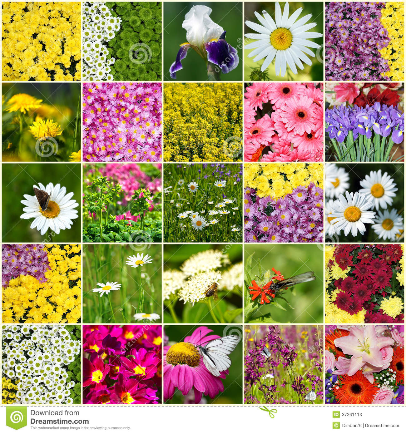 how to draw all different kinds of flowers
