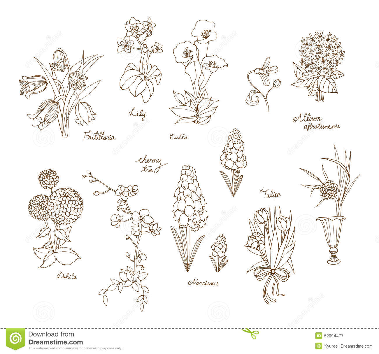 A variety of flowers for spring and summer in hand drawn style royalty free vector dhlflorist Image collections