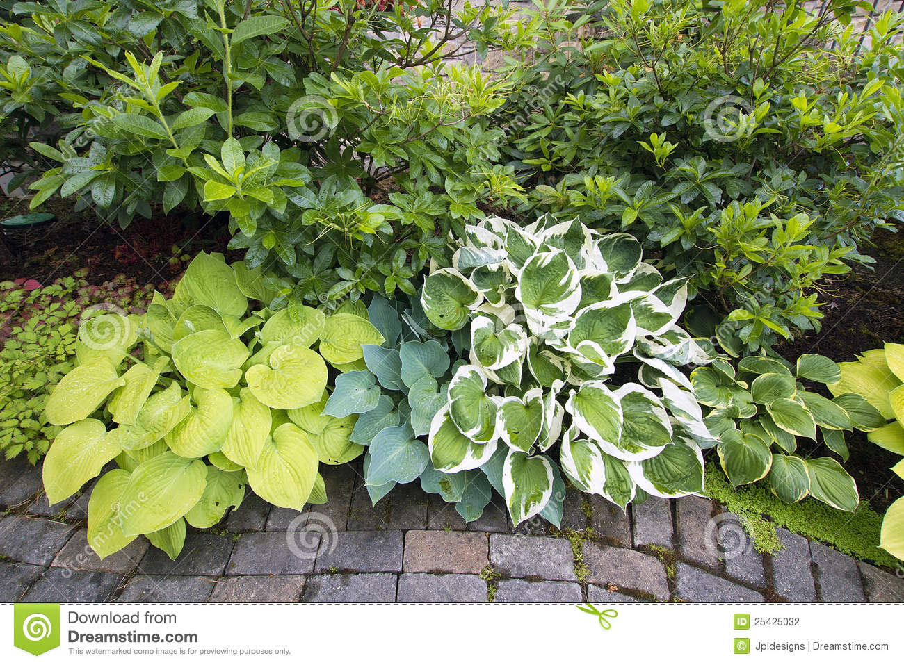 Variety of hostas and shrubs along garden path stock for Garden shrubs