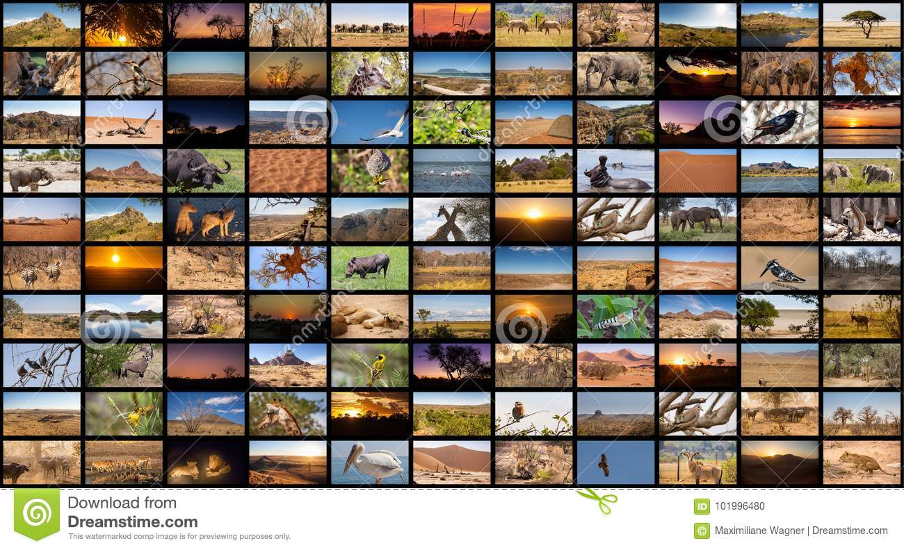 A variety of images of African Landscapes and Animals as a big image wall