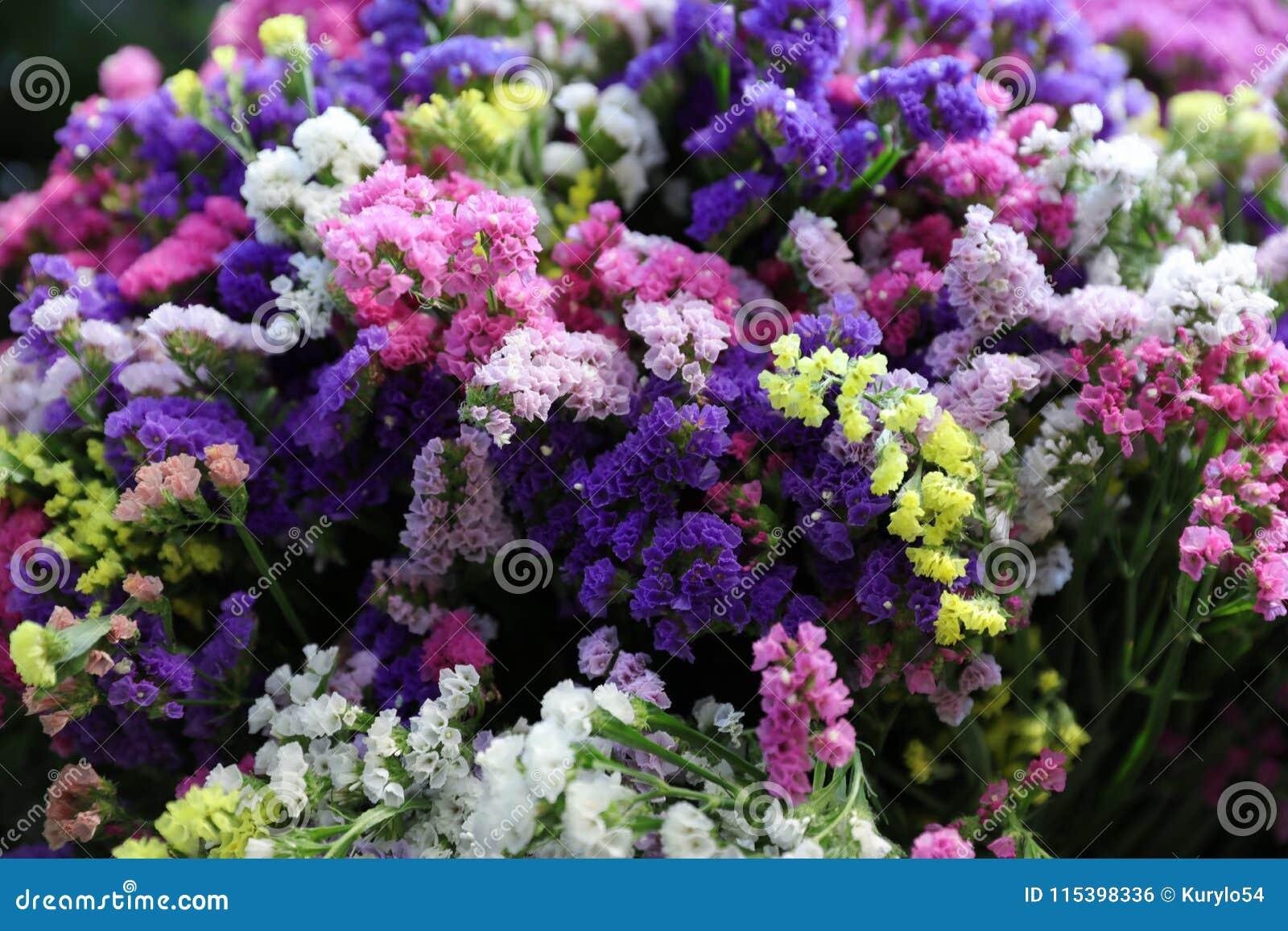 Variety Of Limonium Sinuatum Or Statice Salem Flowers In Blue Lilac