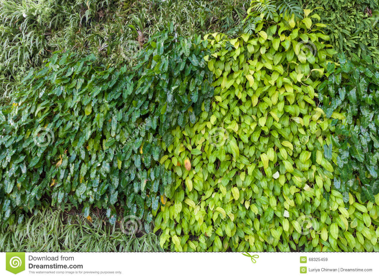 Variety Of Plants In Vertical Garden Texture Wall Stock