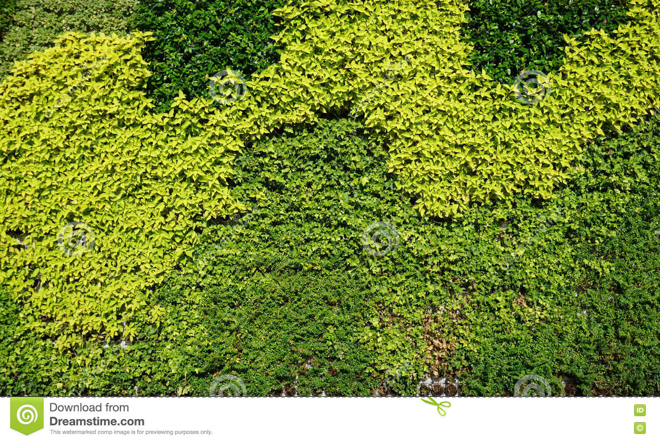 Variety Of Plants In Vertical Garden Texture Stock Photo