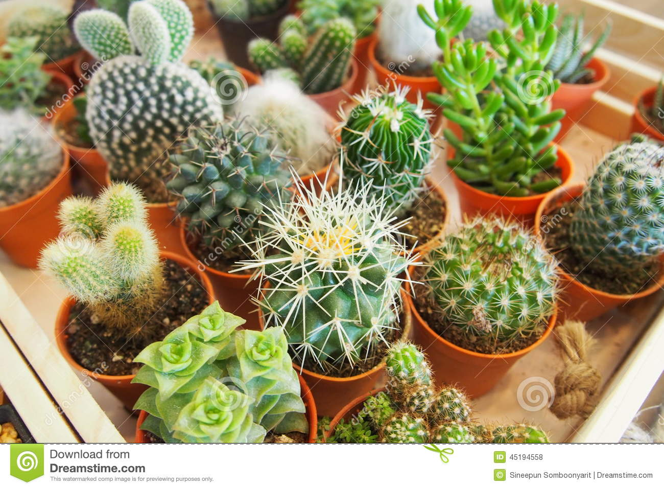 Variety of succulent plants stock photo image 45194558 What are miniature plants grown in pots called