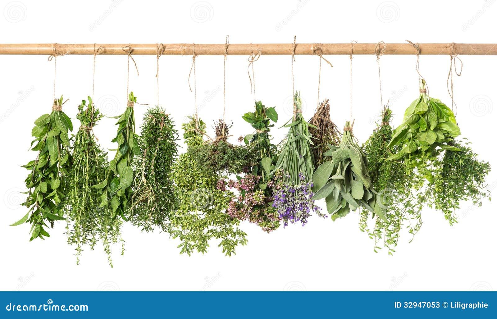 Varios Fresh Herbs Hanging Isolated On White Stock Photos