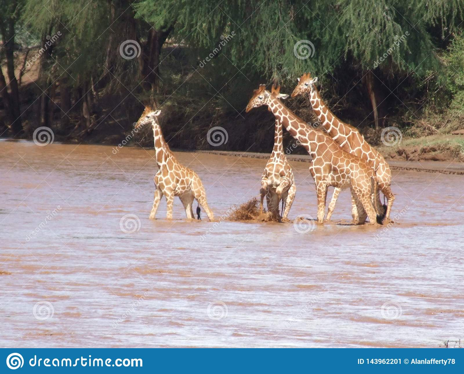Various animals in africa on safari in kenya