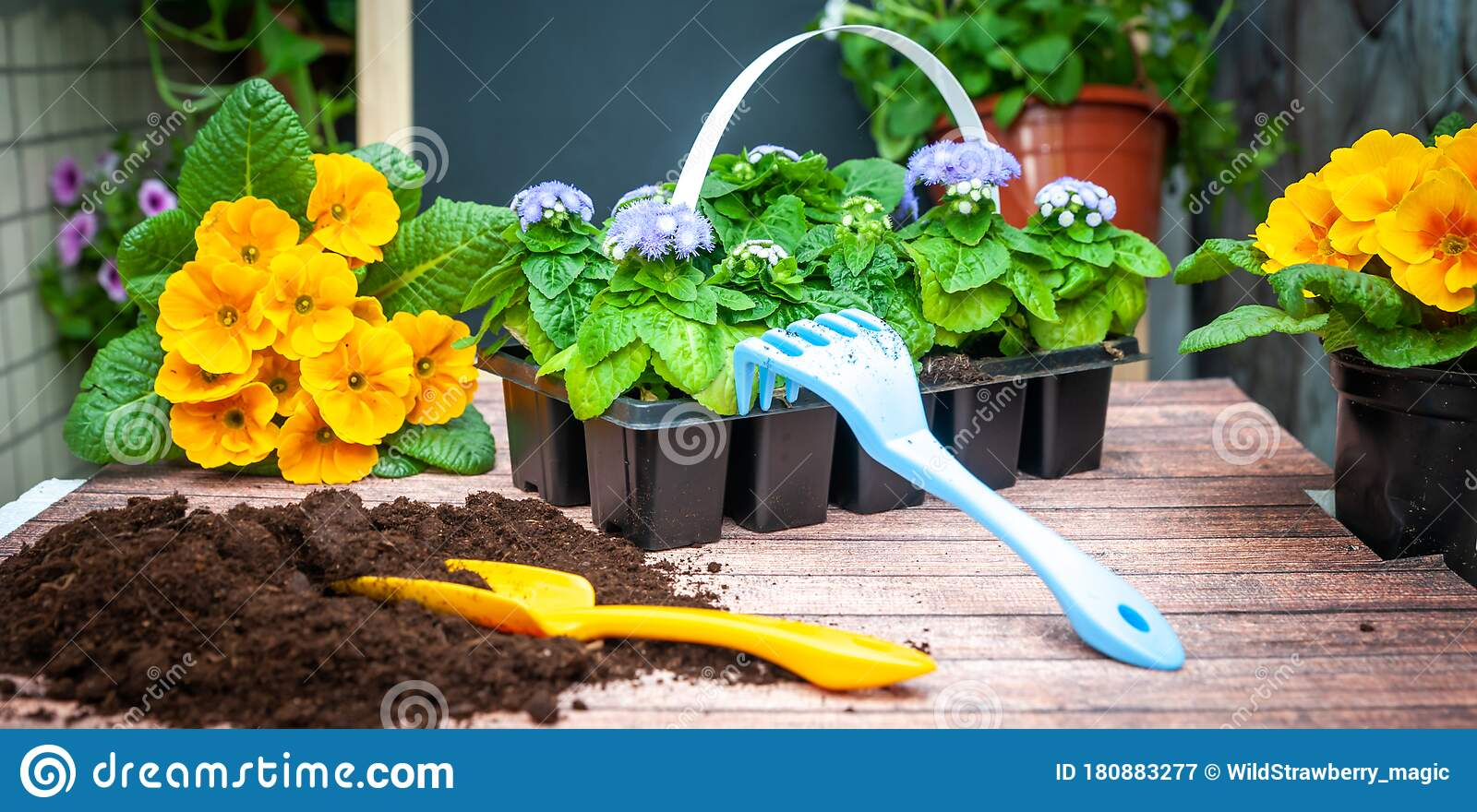 965 Gardening Planning Photos Free Royalty Free Stock Photos From Dreamstime