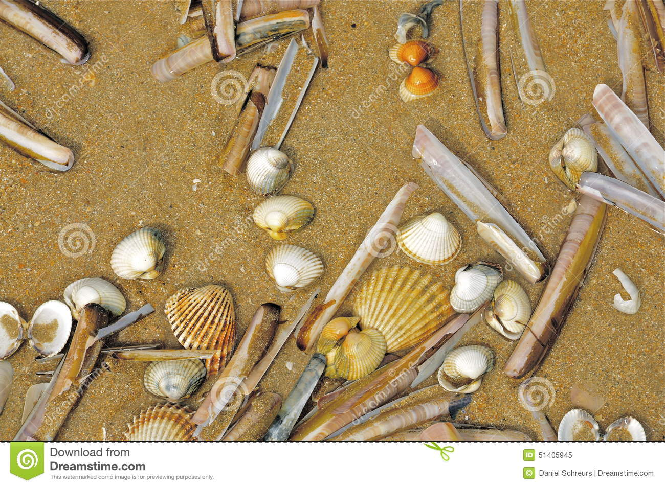 Various Clams and Shells on a Beach in Normandy, France