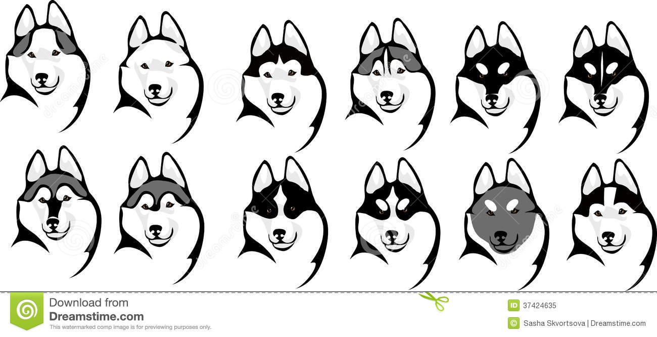 Various Color Options Head Husky Stock Vector Illustration Of
