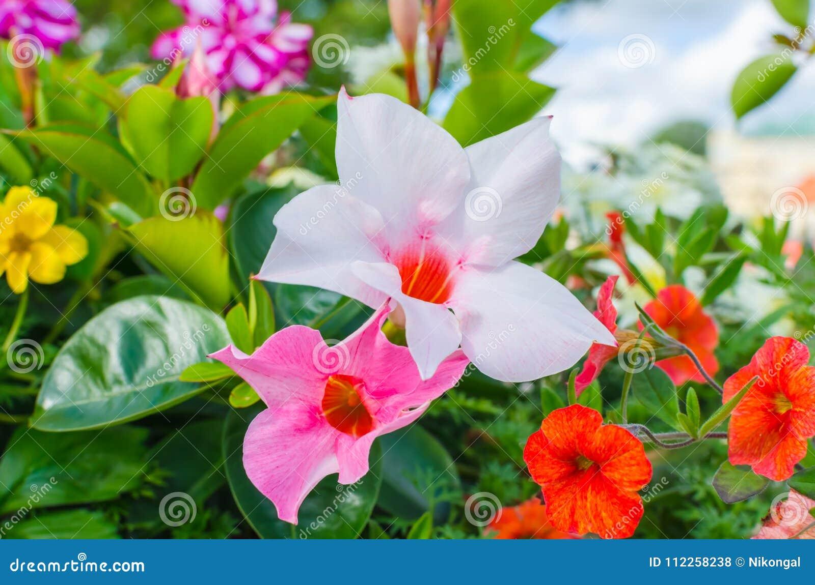 Various colourful flowers blooming in spring stock photo image of various colourful flowers blooming in spring mightylinksfo
