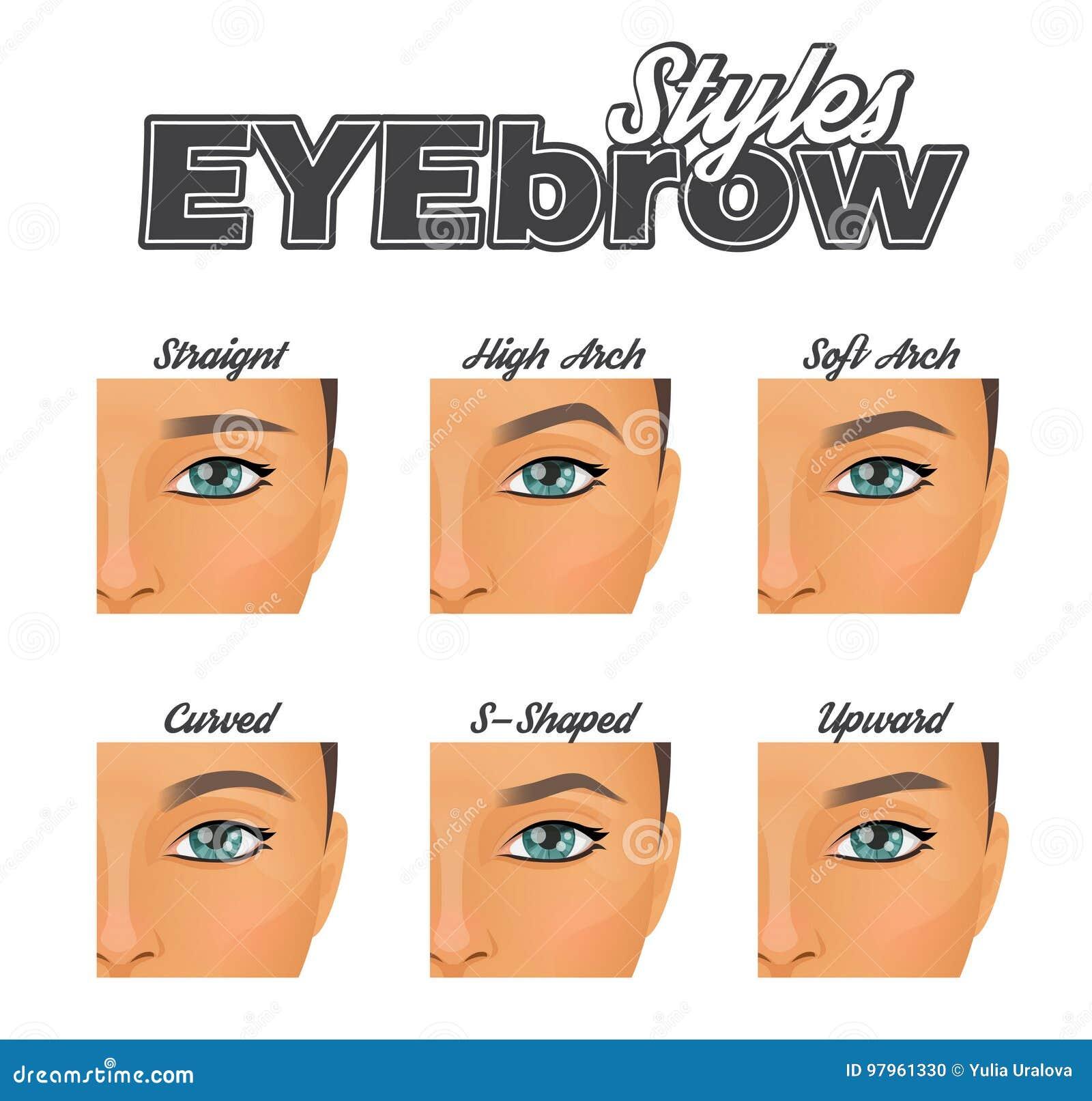Various Eyebrow Shapes Make Up Chart Stock Vector Illustration Of