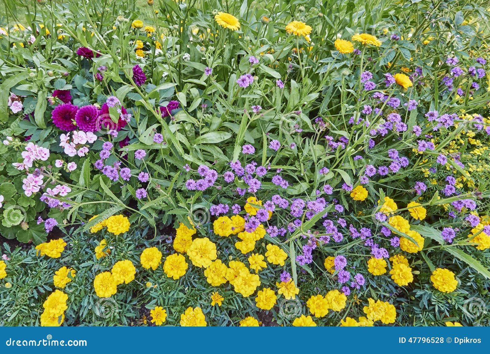 Various Garden Of Delights