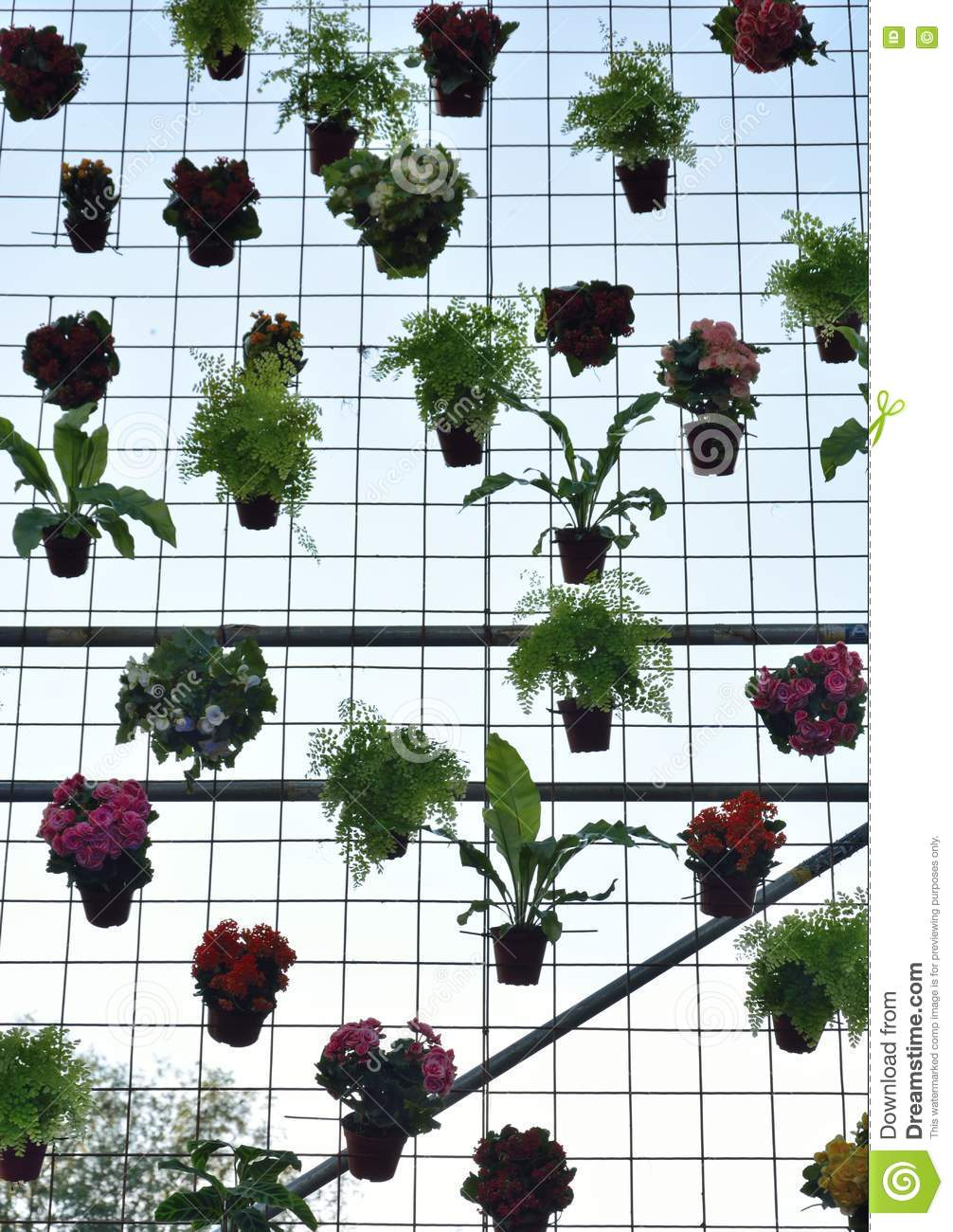 Various Flowers Hanging On A Grid Stock Photo Image Of Flowers Greenery 73613468