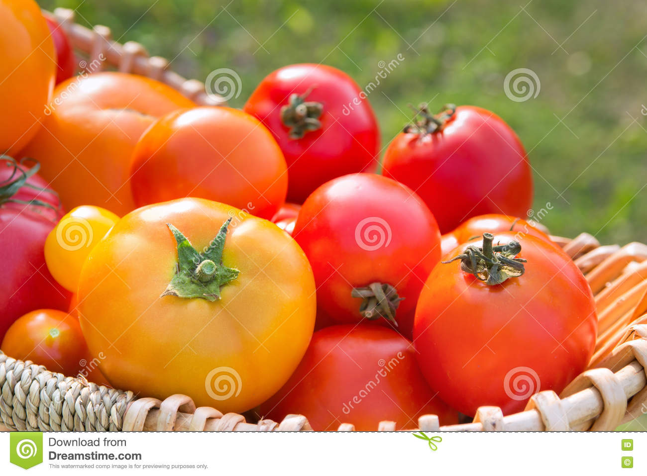 Download Various Fresh Picked Organic Tomatoes In A Basket Cose Stock Photo - Image of home, diet: 75006750